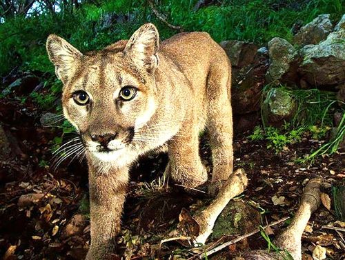 Wildlife_corridor_1_750
